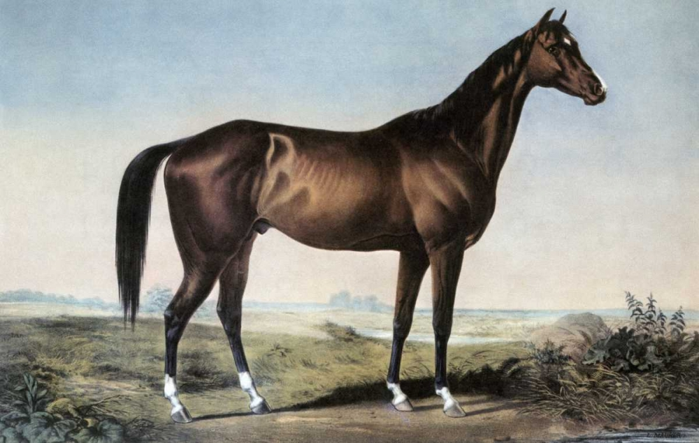 Celebrated Horse Lexington Currier and Ives 90872
