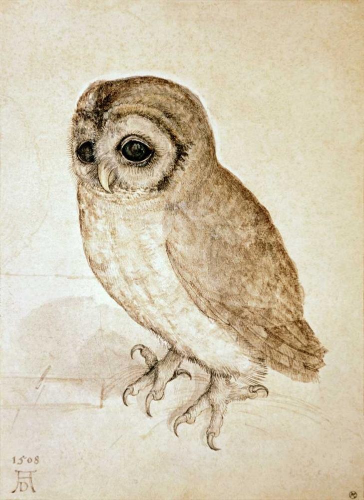Screech Owl Durer, Albrecht 90989