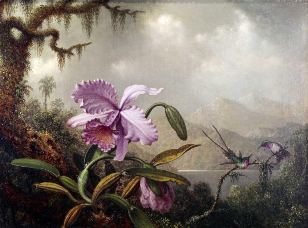 Hummingbirds and Orchids Heade, Martin Johnson 91144