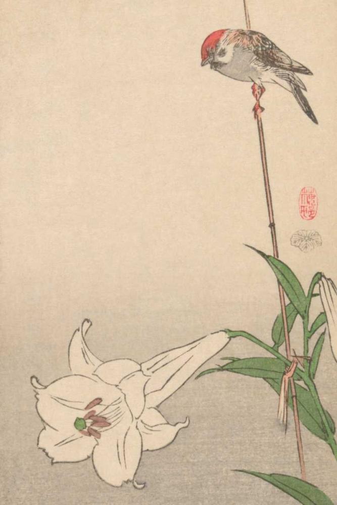 Small bird on lily plant., 1893 Baison 96007