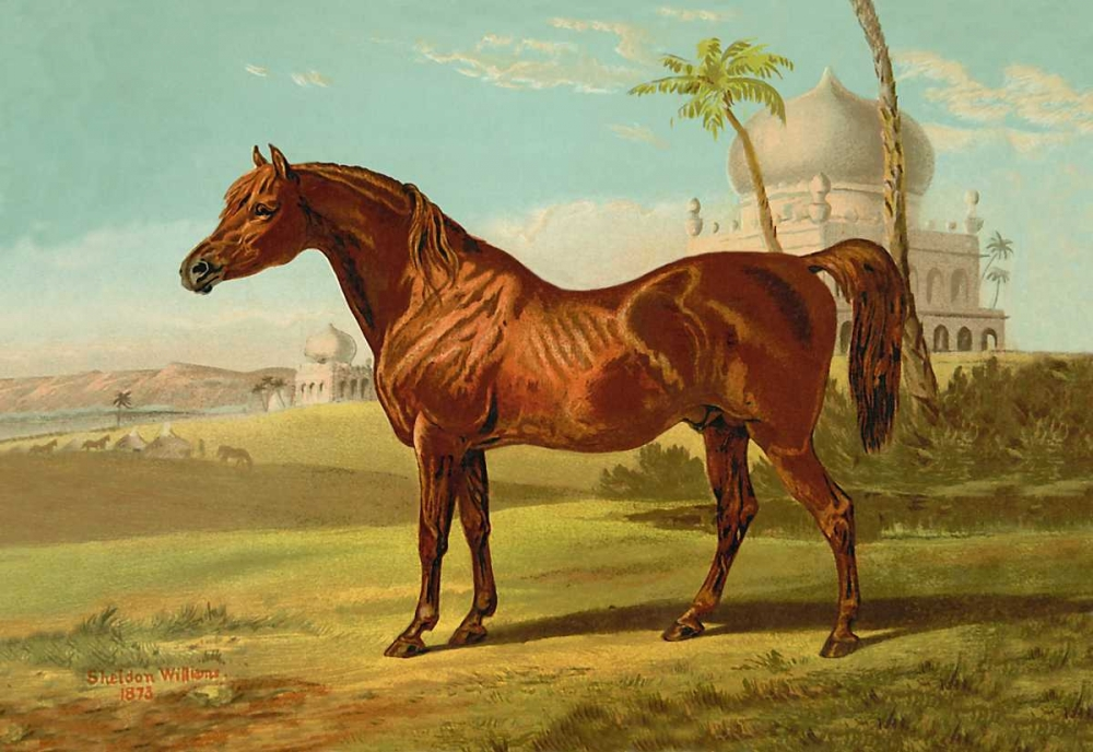 Goldie Arab, 1900 Sidney, Samuel 93839