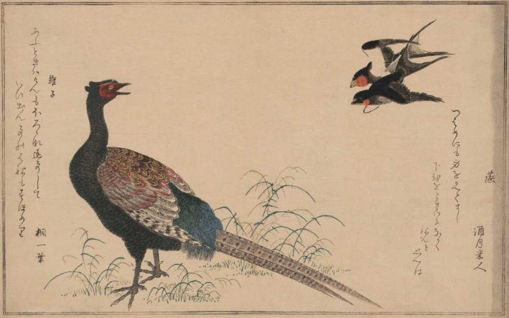Pheasant Unknown 96626