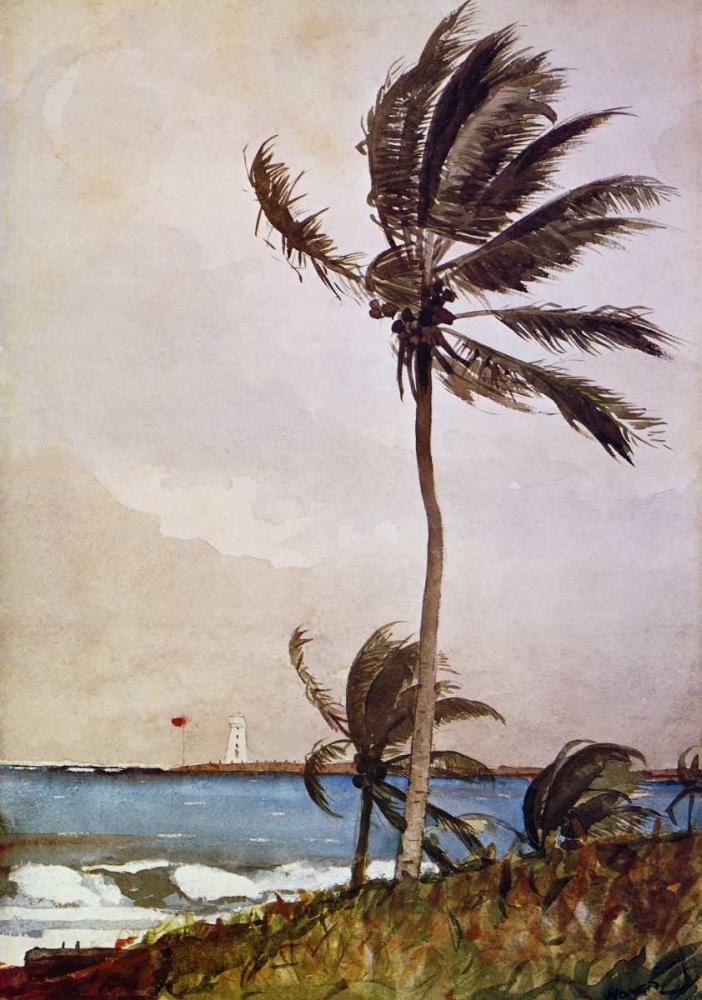 Palm Tree Nassau Homer, Winslow 92573