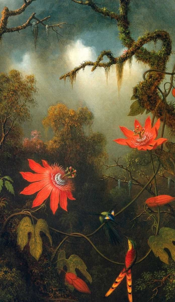 Two Hummingbirds Perched On Passion Flower Vines Heade, Martin Johnson 93038