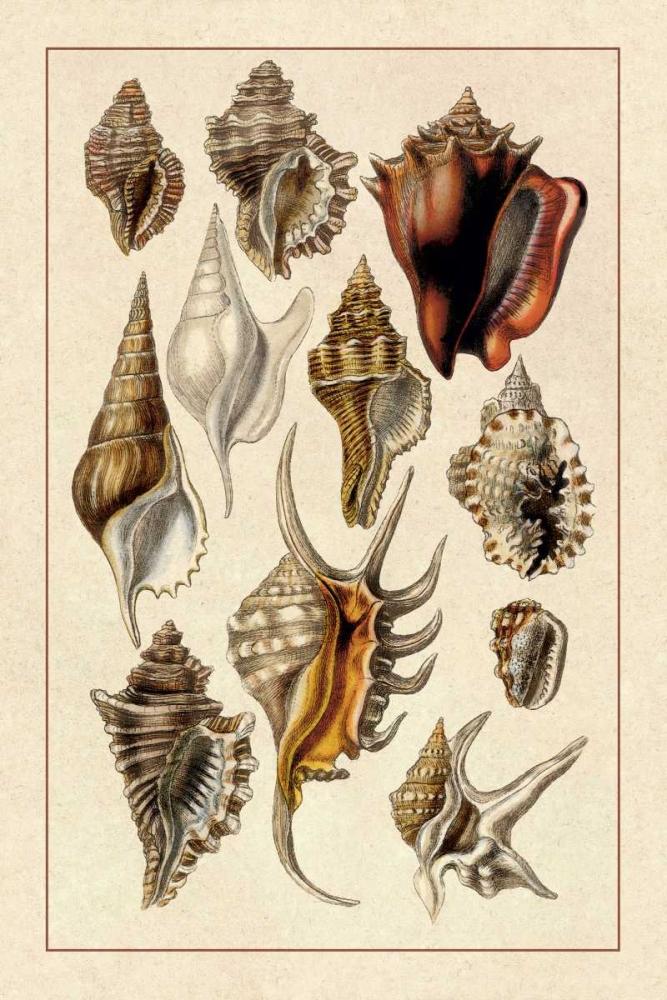 Shells: Trachelipoda #5 Sowerby, G.B. 96190