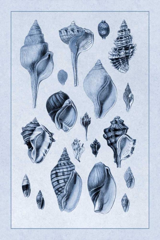 Shells: Sessile Cirripedes #3 (Blue) Sowerby, G.B. 96205