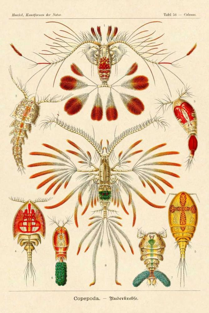 Haeckel Nature Illustrations: Crustaceans Haeckel, Ernst 96087