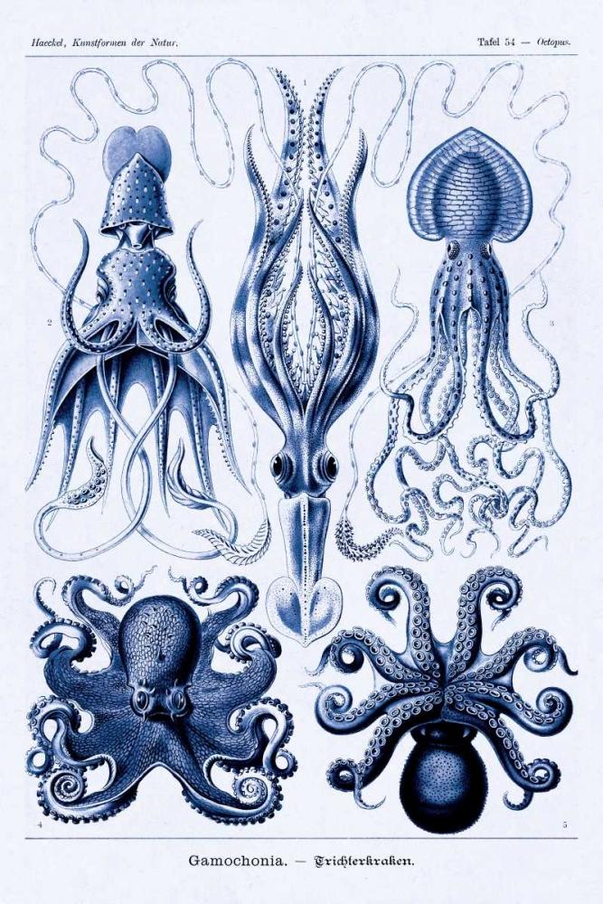 Haeckel Nature Illustrations: Jelly Fish - Dark Blue Tint Haeckel, Ernst 96123