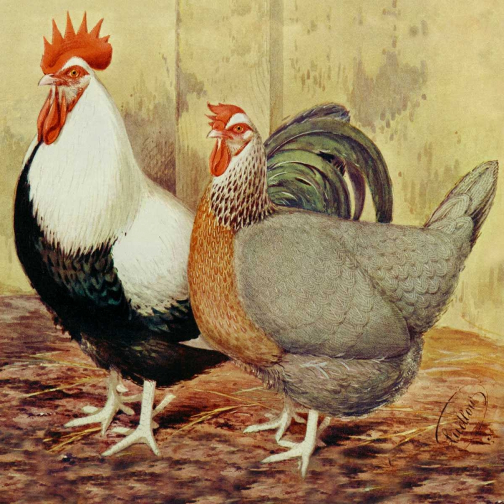 Chickens: Silver-Grey Dorkings Wright, Lewis 96327