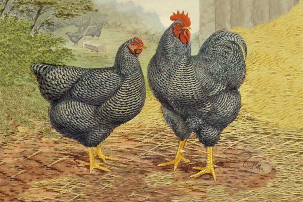 Chickens: Plymouth Rocks Wright, Lewis 96337
