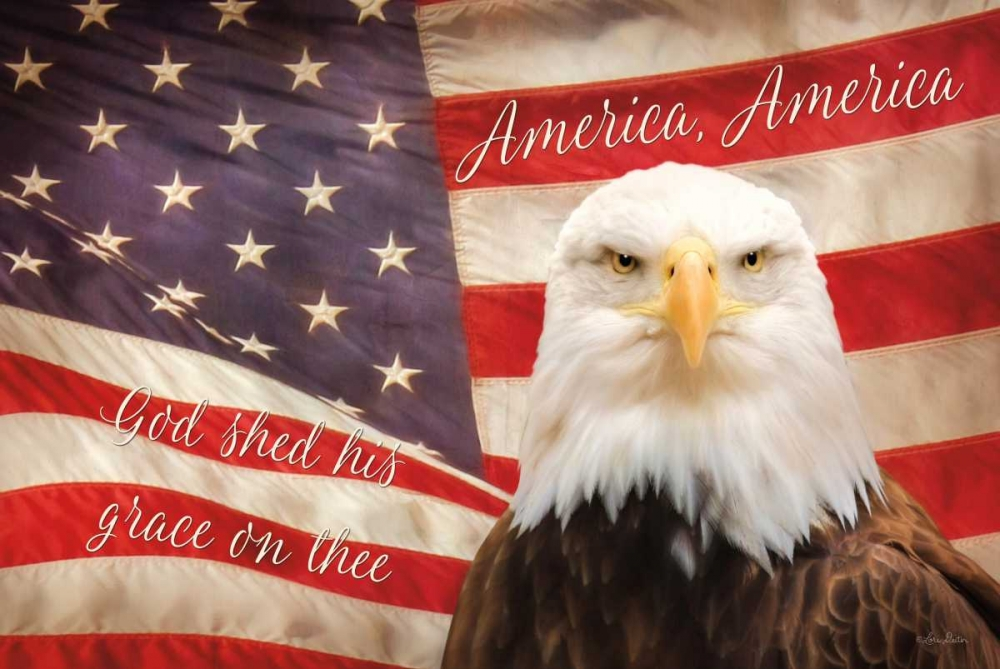 American Eagle Flag Deiter, Lori 124594