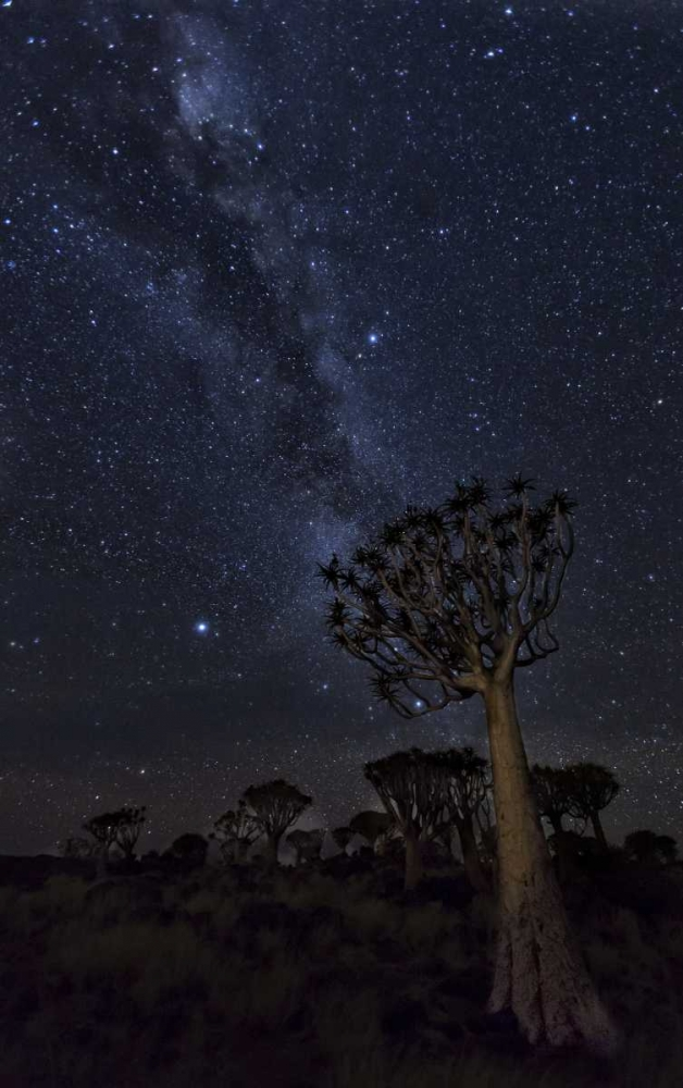 Namibia Milky Way and quiver trees at night Kaveney, Wendy 130122