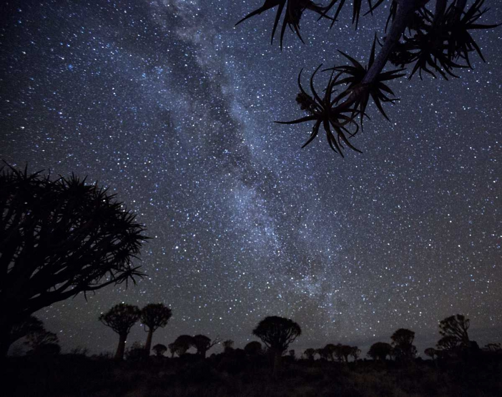 Namibia Milky Way and quiver trees at night Kaveney, Wendy 130123
