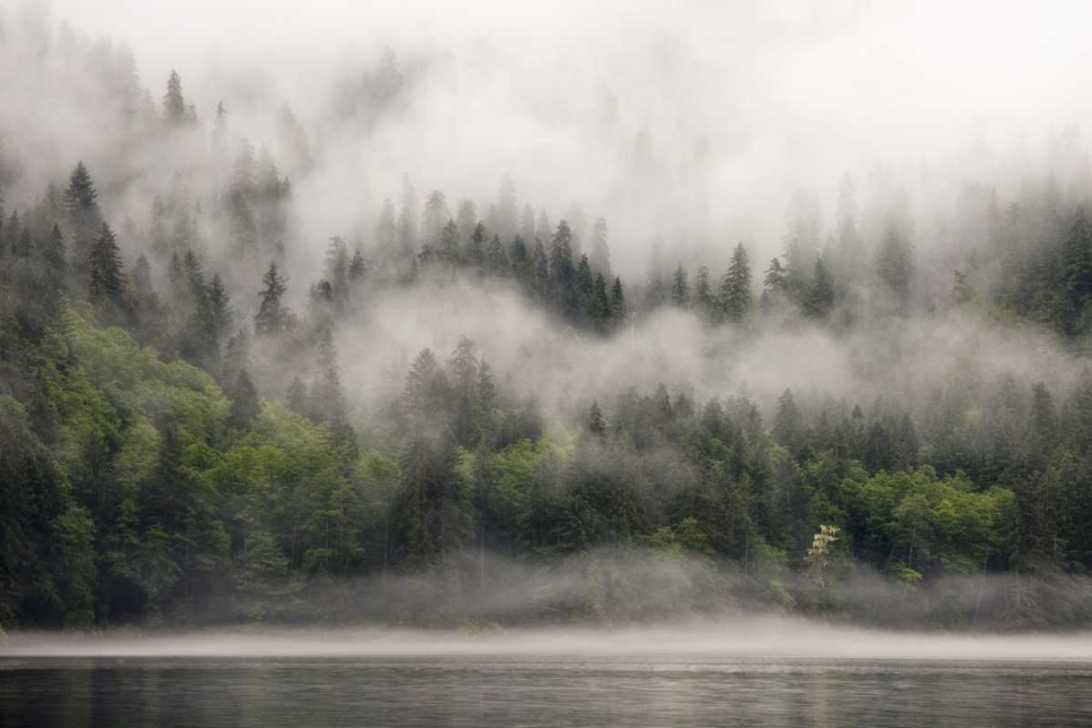 Canada, BC, Fog-shrouded forest by ocean inlet Paulson, Don 133195