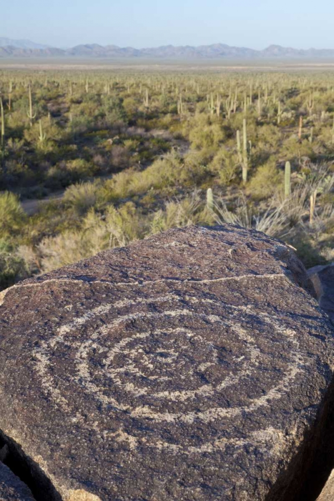 Arizona, Saguaro NP Hohokam Indian petroglyph Paulson, Don 132685