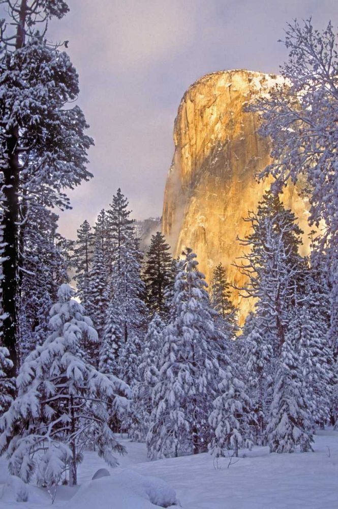 California, Yosemite El Capitan lit by sunlight Welling, Dave 135914