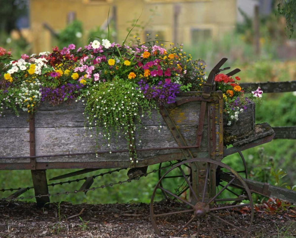 OR, Portland Farm spreader filled with flowers Terrill, Steve 135665