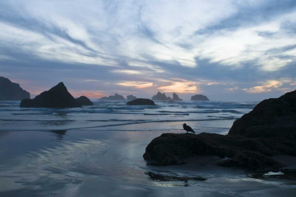 OR, Bandon Beach Seagull silhouette at sunset Rotenberg, Nancy 133978