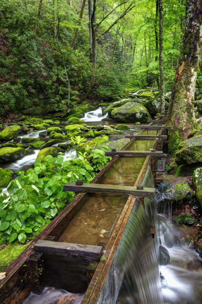 TN, Great Smoky Mts View of the Tub Mill flume Flaherty, Dennis 127852