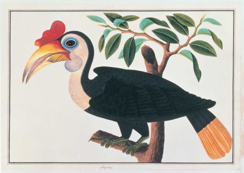 Ingang, Hornbill Anonymous, 19th C 119160