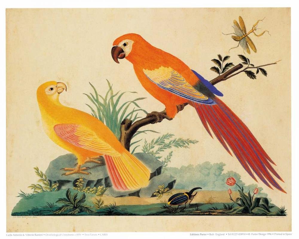 Two Parrots Raineri, Carlo, Vittorio 119191