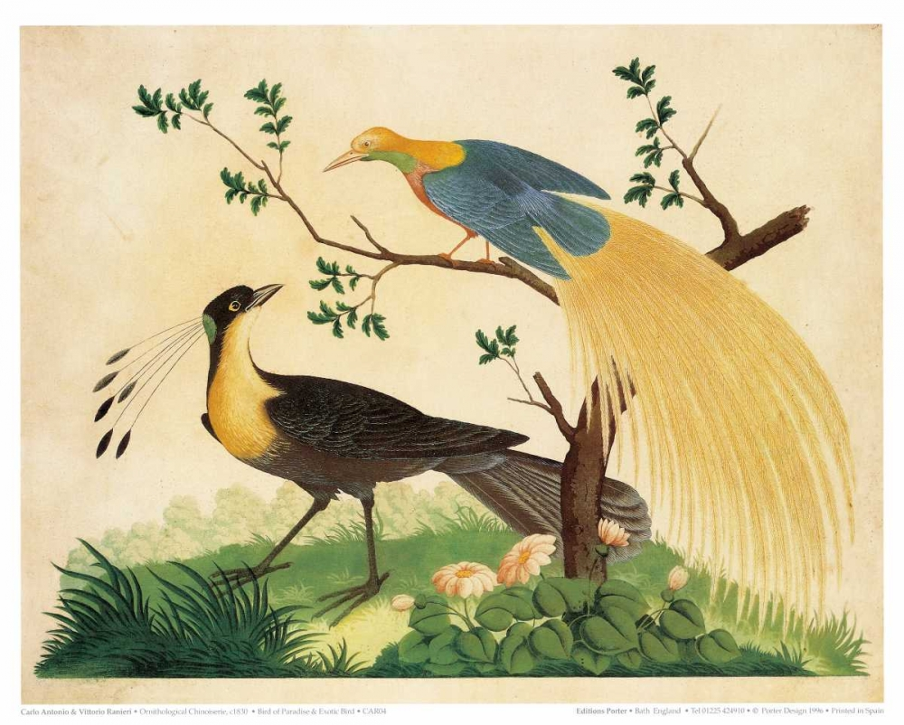Bird of Paradise and Exotic Bird Raineri, Carlo, Vittorio 119194