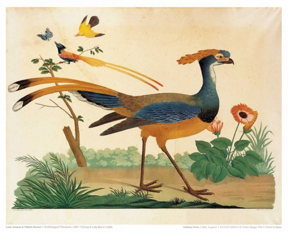 Flytrap, Little bird and Butterfly Raineri, Carlo, Vittorio 119196