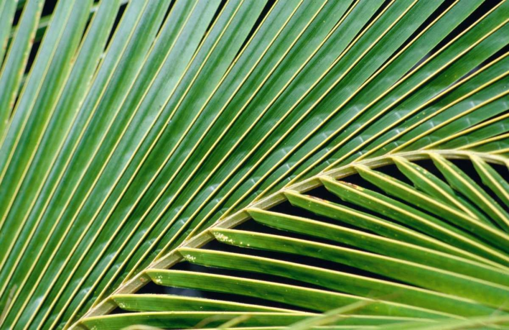 Palm Frond Blue, Cyril 119209