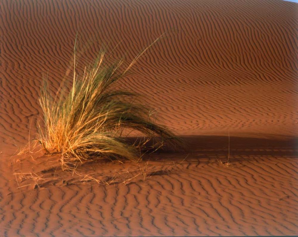 Grass, Sand Dune Sahara Blue, Cyril 119213
