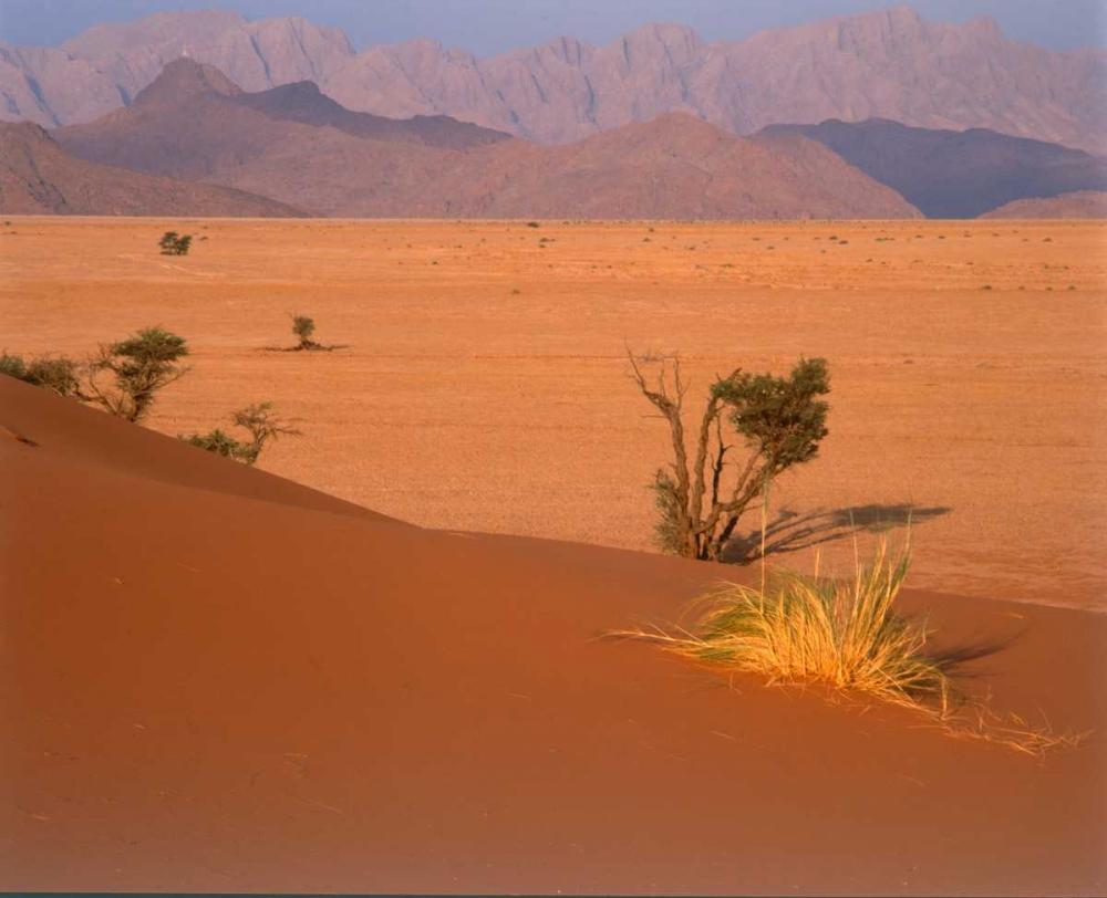 Grasses, Trees, Sand Dunes Sahara Blue, Cyril 119215