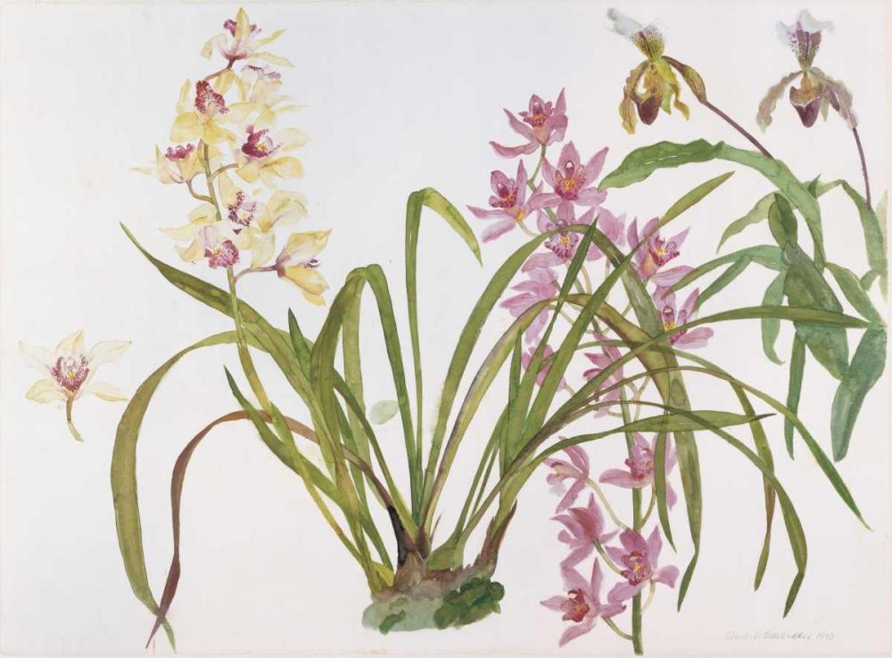 Orchids, Paphiopedilum and Cymbidium Blackadder, Elizabeth 154537