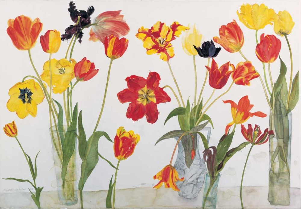 Red and Yellow Tulips Blackadder, Elizabeth 154539