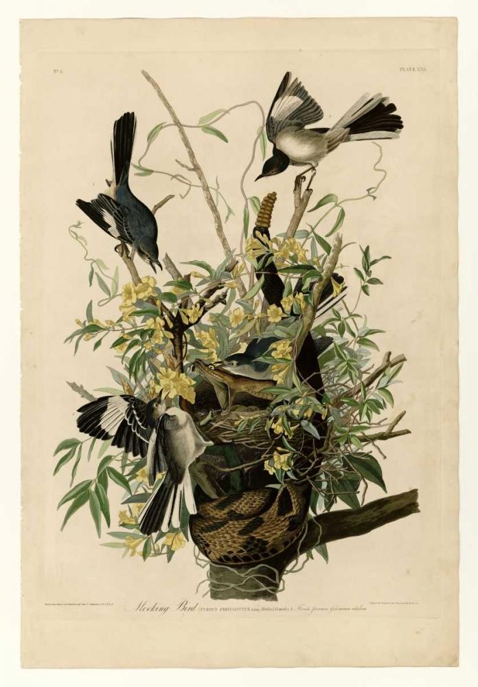 Mocking Bird Audubon, John James 119325