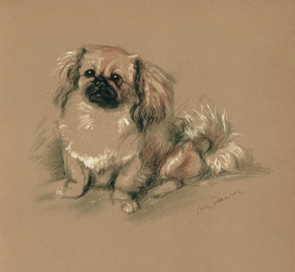 Pekinese, Koko Dawson, Lucy 119365