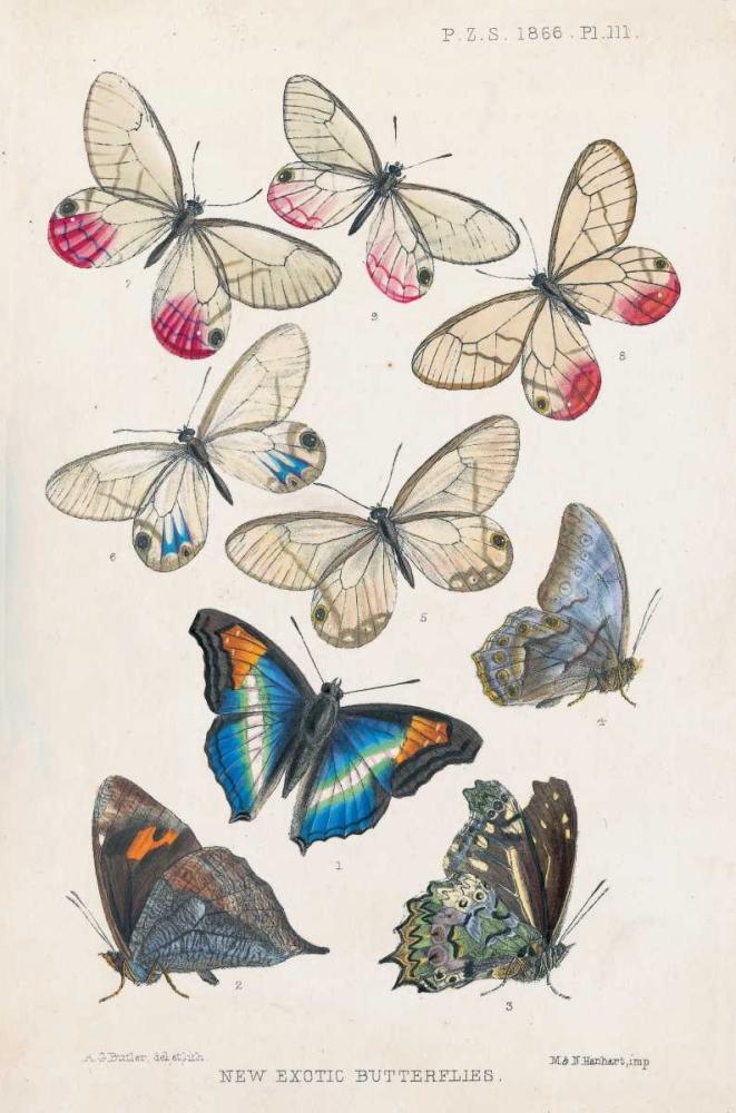 Exotic Butterflies Butler, A G 126471