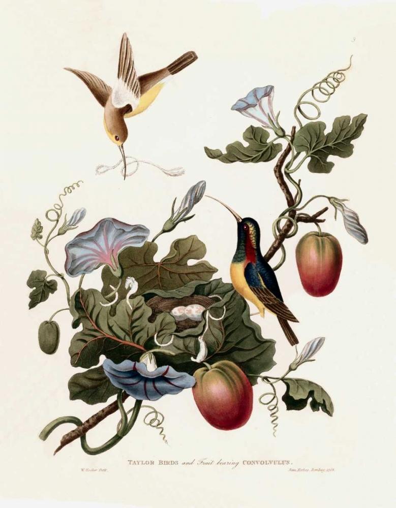 Taylor Birds Hooker, William 119440