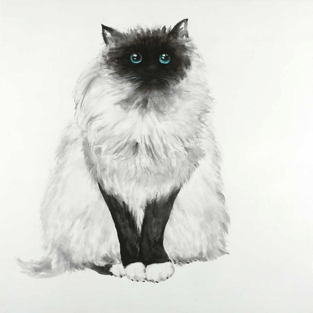Blue Eyes Fluffy Siamese Cat Atelier B Art Studio 150837