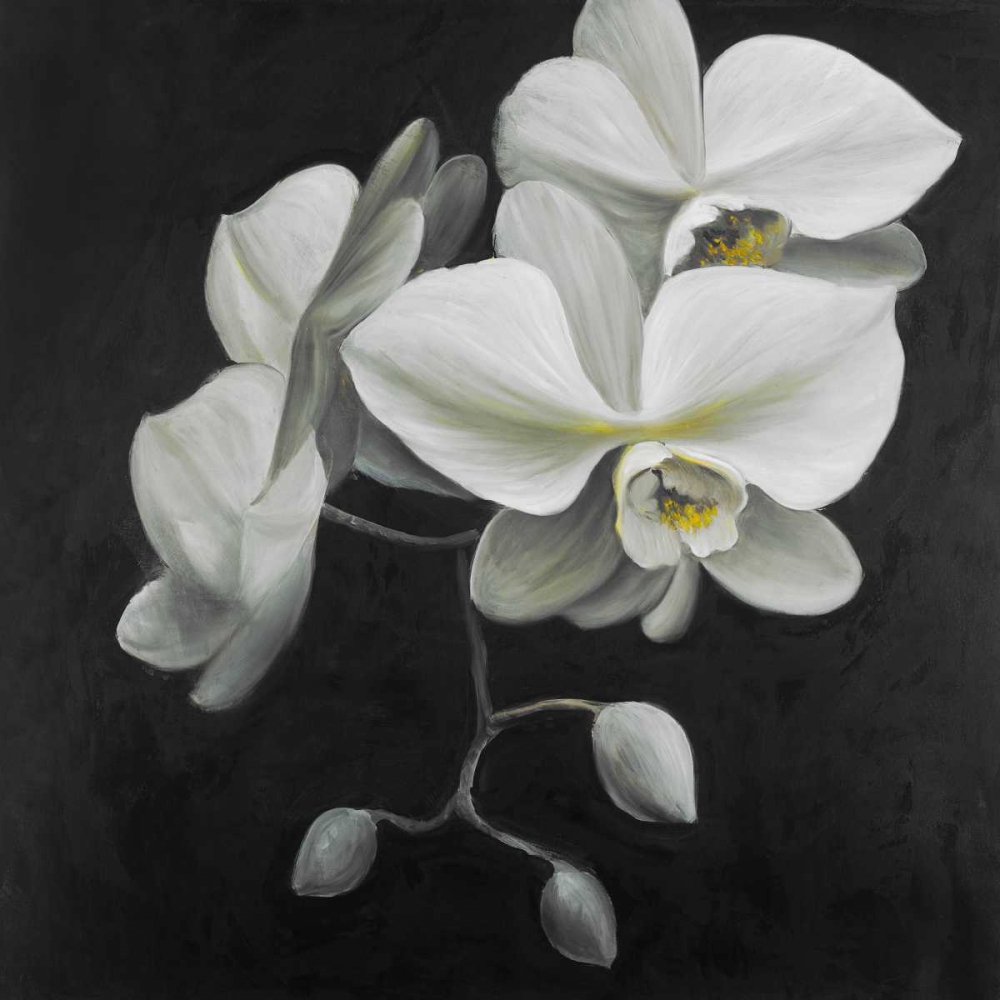 White Orchids Atelier B Art Studio 163043