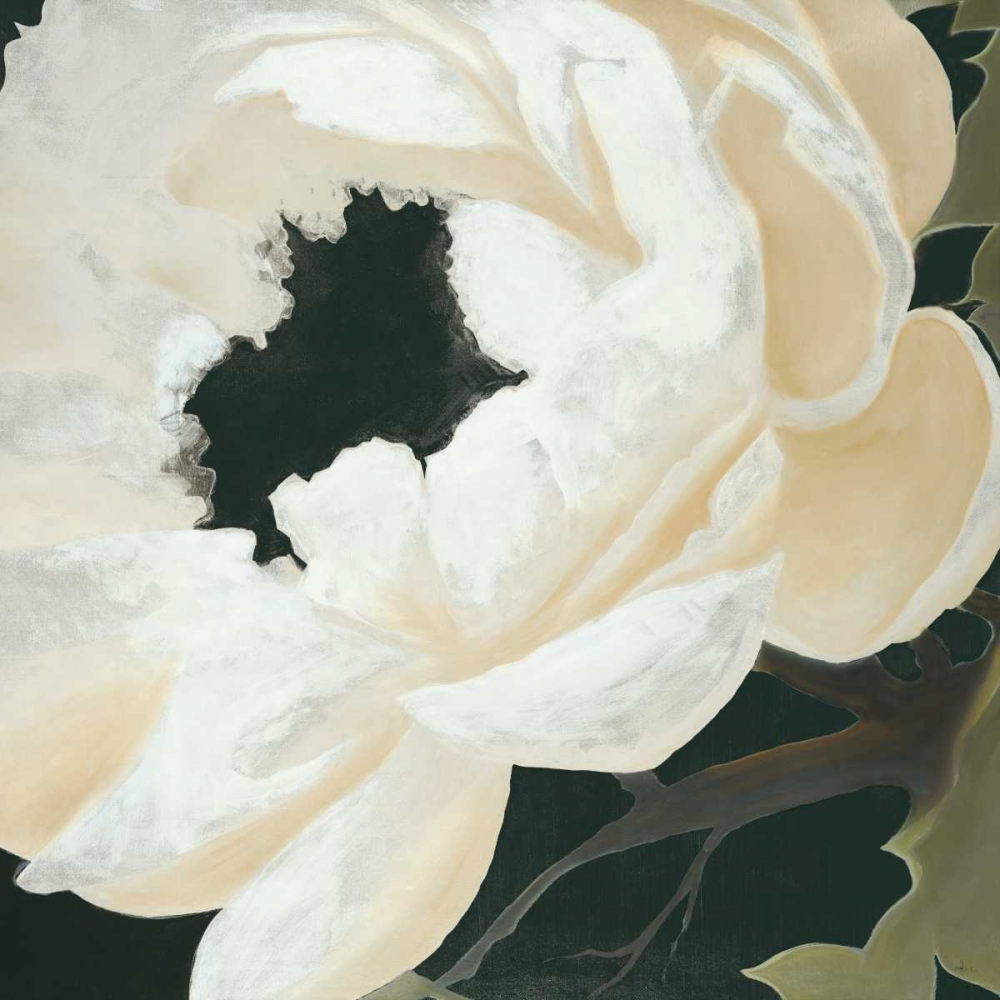 Floral Study Haxton, KC 158007